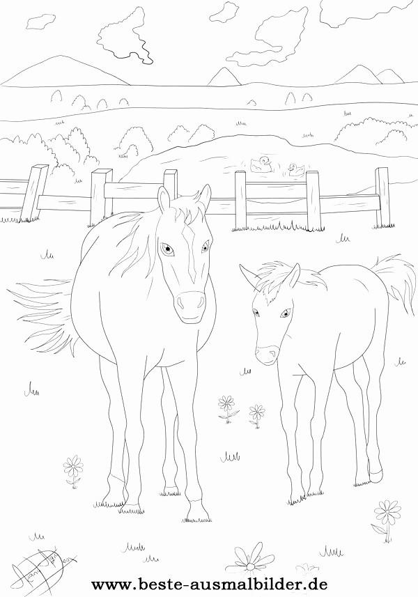 ausmalbilder 3 jahre genial malvorlagen pferde attachmentg