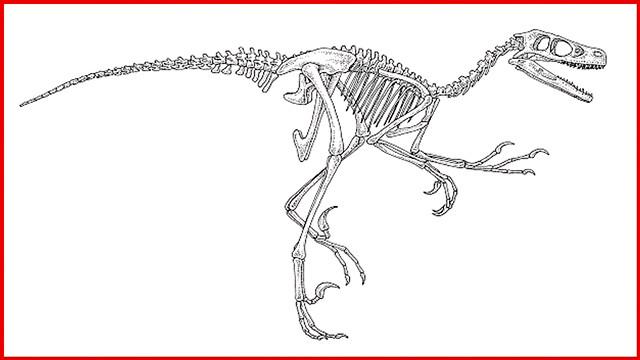 malvorlage dinosaurier skelett  dinosaurierinteresse