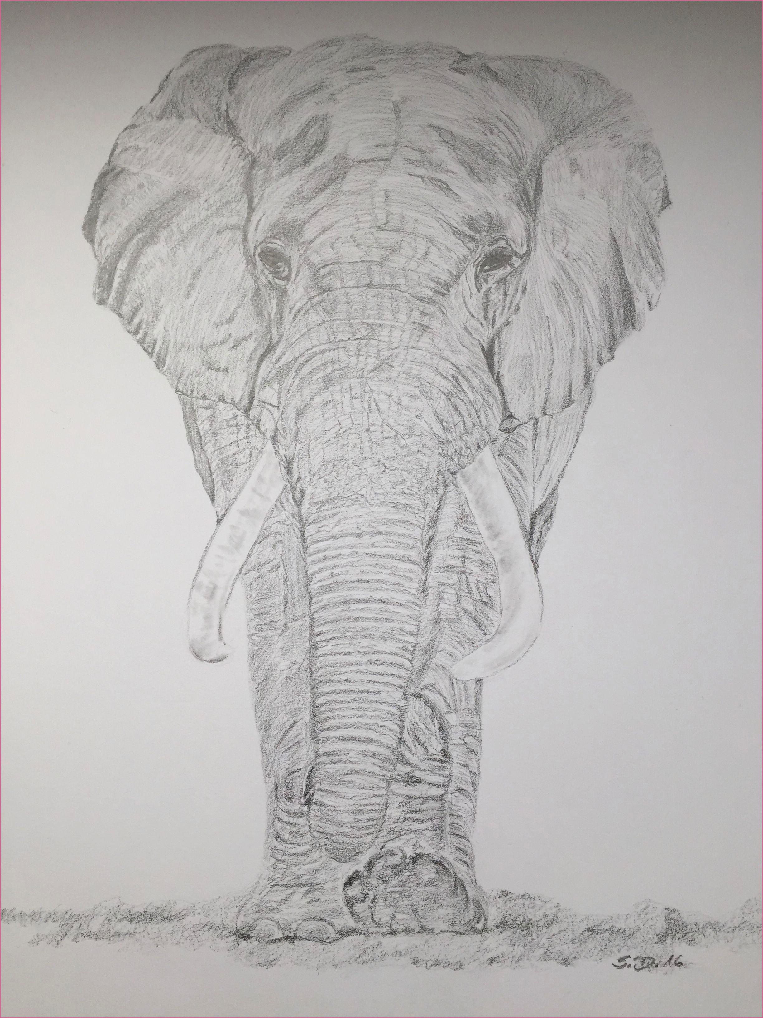 ausmalbilder elefant das beste von 60 geburtstag sketch
