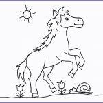 Ausmalbilder Pferde Das Beste Von Ausmalbilder Pferde Zum Ausdrucken Neu Pferd Malvorlagen Bild