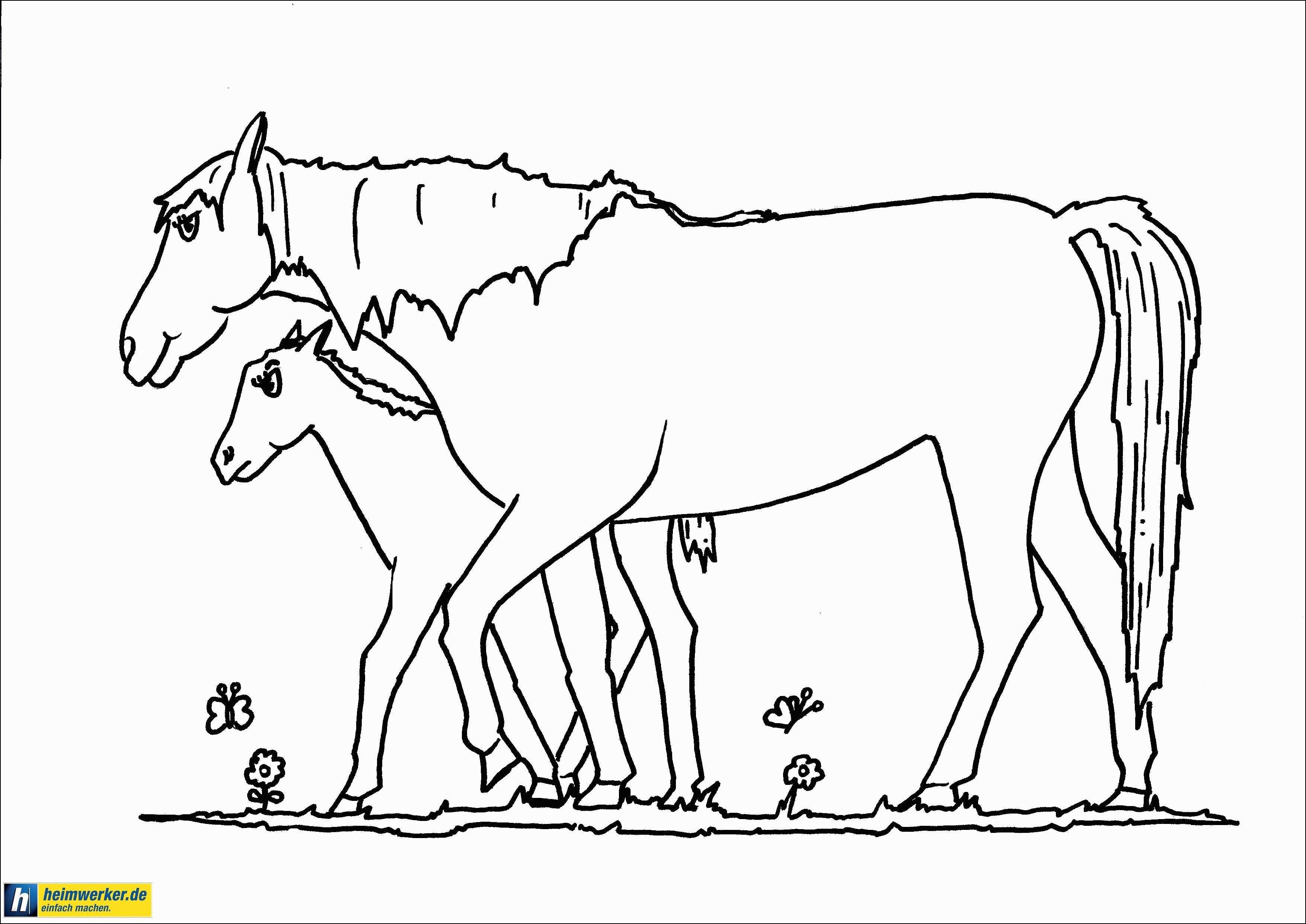 Ausmalbilder Pferde Frisch Einfach Ausmalbilder Pferde Turnier Cavespringlibrary Stock
