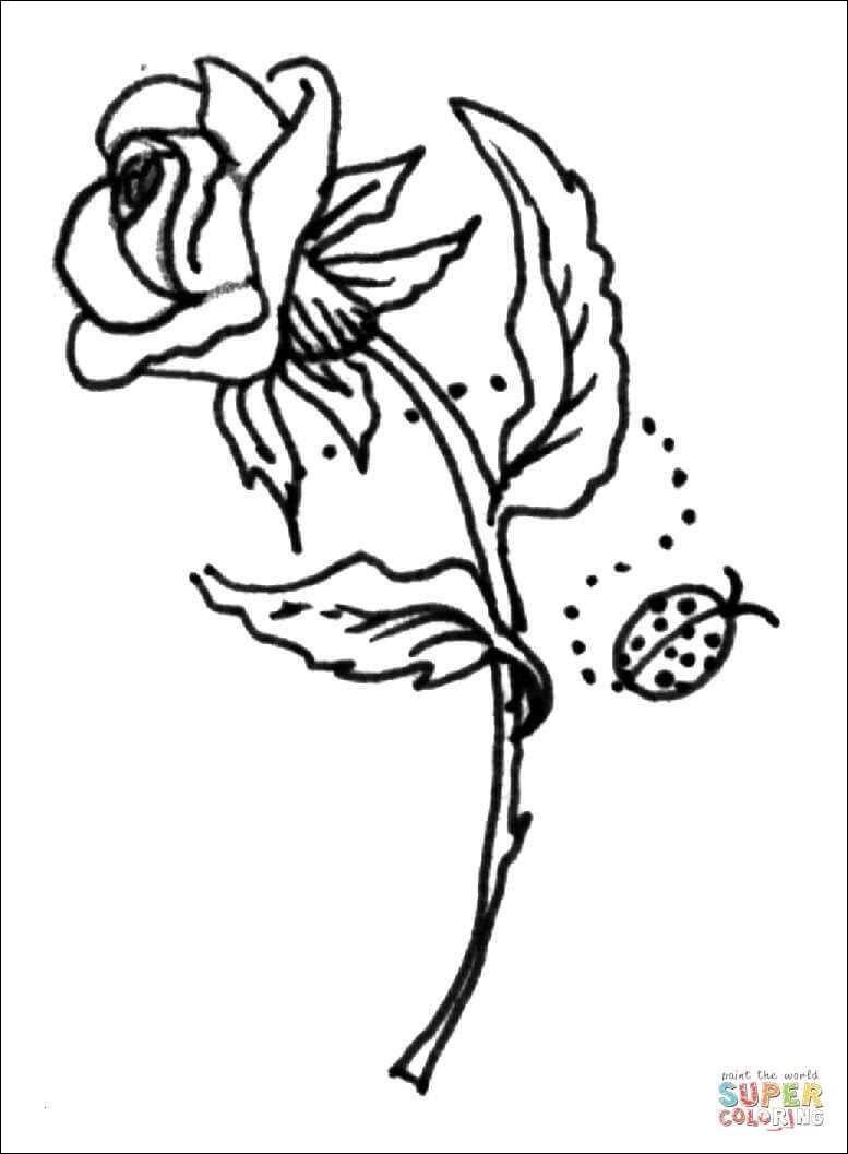 Ausmalbilder Rosen Inspirierend Malvorlagen Rosen Mandala Fotos