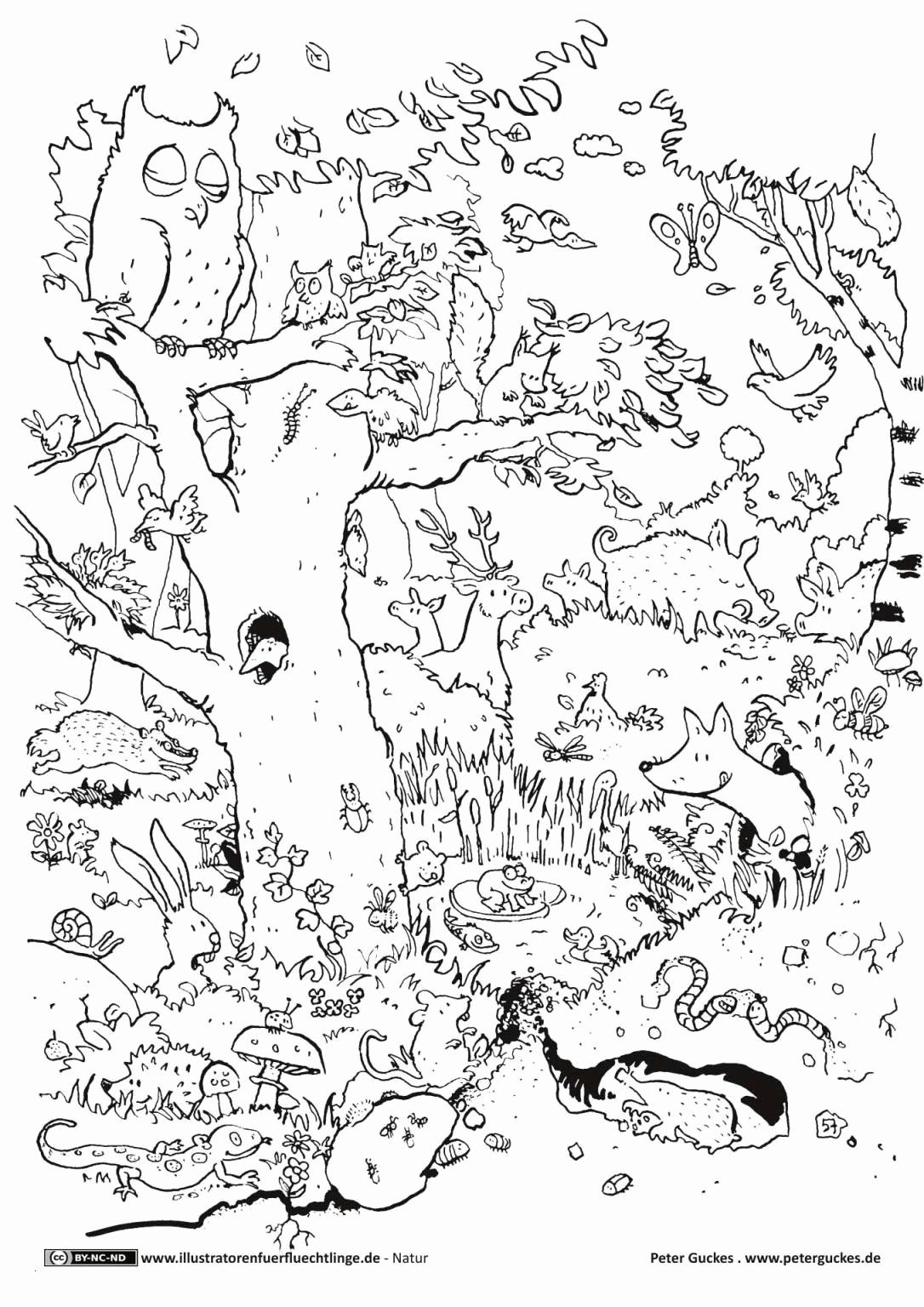 Ausmalbilder Sterne Das Beste Von Malvorlage Sterne Zeichnung Disegni Pokemon Malvorlagen Igel Best Sammlung