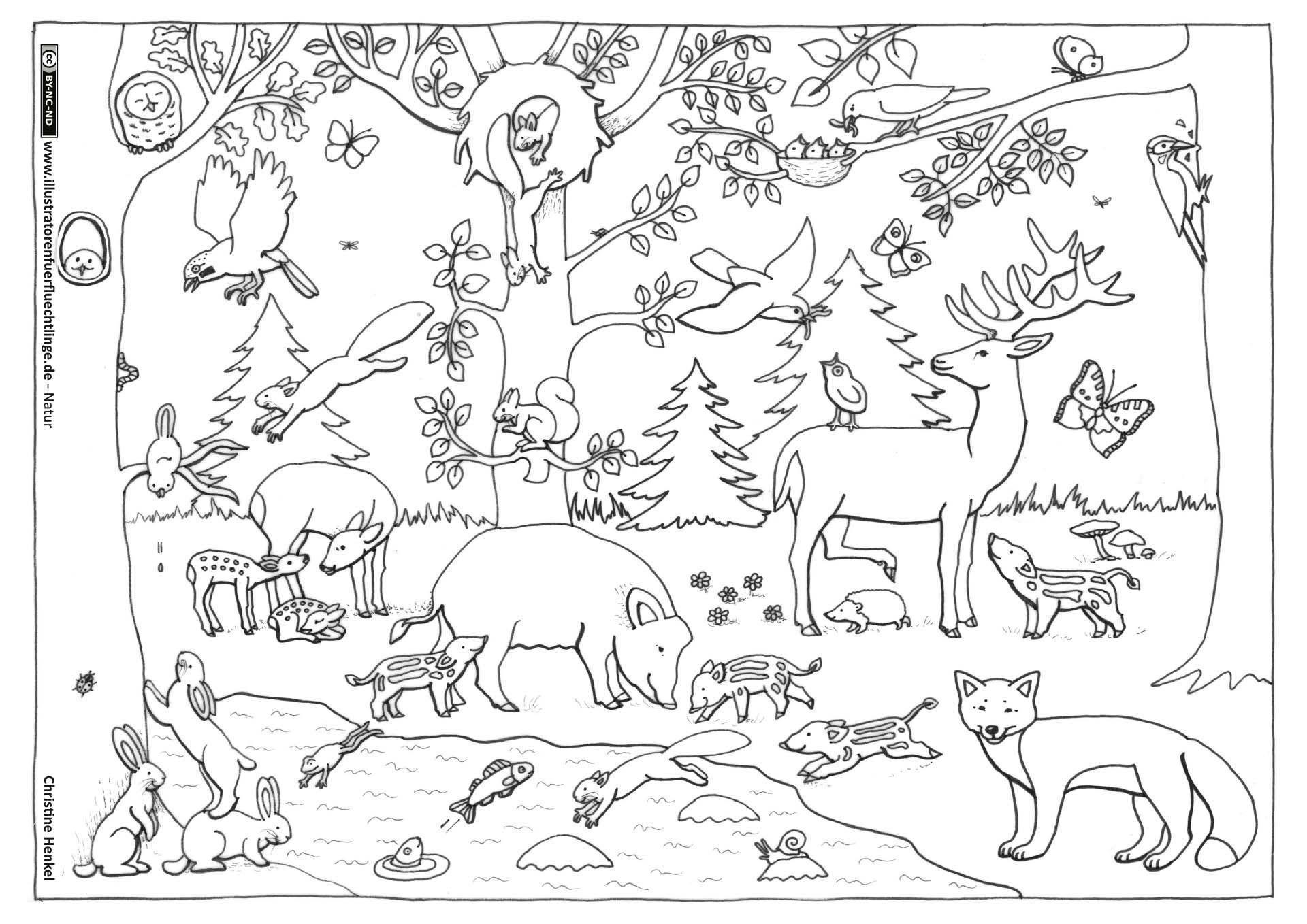 56 genial ausmalbilder tiere zoo bilder  kinder bilder