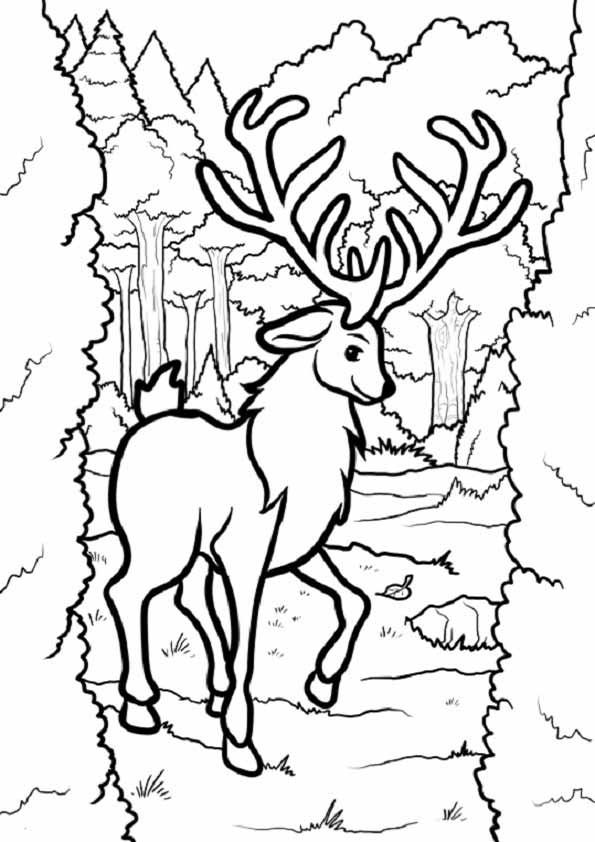 1001 Ausmalbilder Weihnachten Frisch Ausmalbilder Elch Sammlung