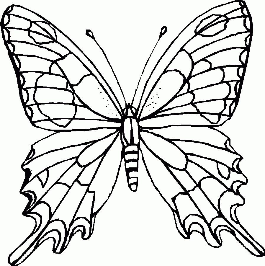 Ausmalbilder Für Weihnachten Das Beste Von Malvorlage Schmetterling Zum Ausdrucken Malvorlagencr Galerie