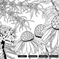 Ausmalbilder Weihnachten Nussknacker Einzigartig Malvorlage Echinacea Bild