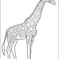 Ausmalbilder Prinzessin Mittelalter Einzigartig Malvorlagen Giraffe Als Polizist Zwdg Sammlung