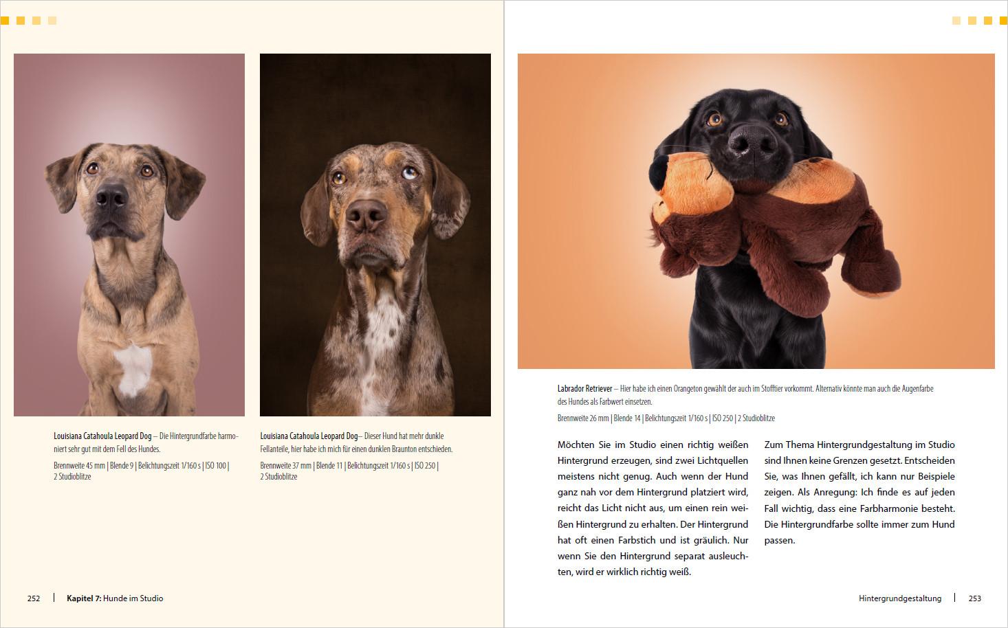 "Malvorlagen Ben 10 Genial Hunde Shooting Fotografieren Mit ""wau Effekt"" J7do Galerie"