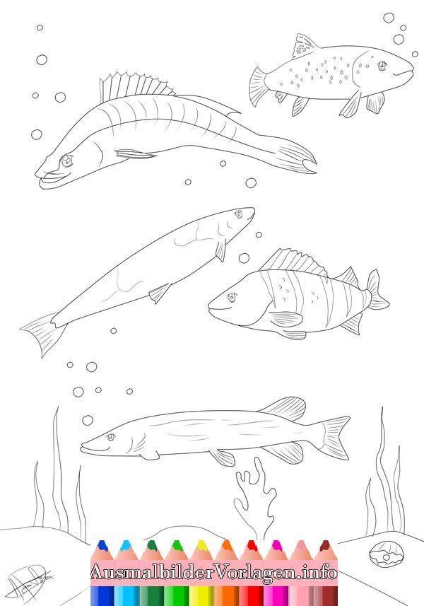 Malvorlagen Fische Das Beste Von Malvorlagen Fische Hecht J7do Galerie