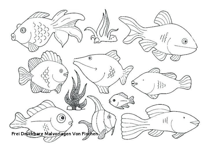 Malvorlagen Fische Genial Malvorlagen Fische attachmentg Title Xtd6 Galerie