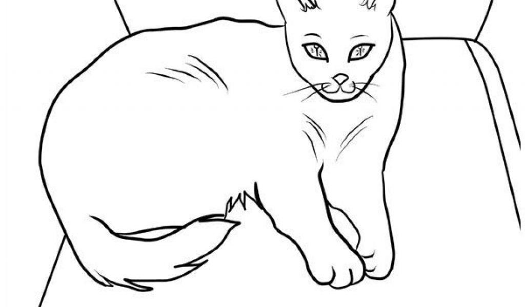 Malvorlagen Katzen Einzigartig Malvorlage Katze Schön Ausmalbild Katze attachmentg Title Jxdu Sammlung